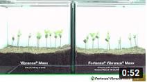 video thumbnail of Fortenza Vibrance Maxx vs. Vibrance Maxx on June beetle