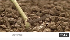 video thumbnail of Fortenza seed treatment helps you control cutworms
